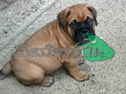 Pets Animals Best Online Classifieds In Sri Lanka Buy And Sell