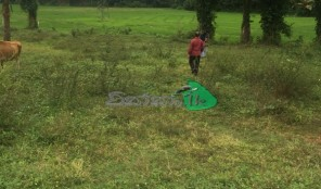 Land for sale in Weliweriya with the scenic view of paddy field